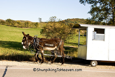 """Not a Mule"" - Donkey Train, Richland County, Wisconsin"