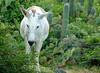 1204_Donkeys_002