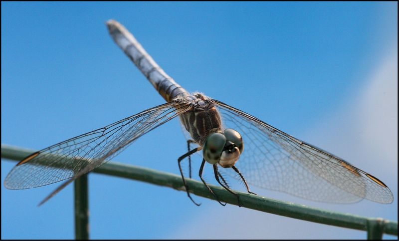 dragonfly on post