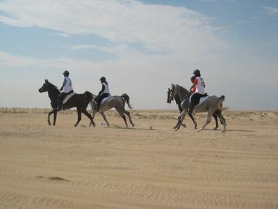 Dubai Endurance Stables team