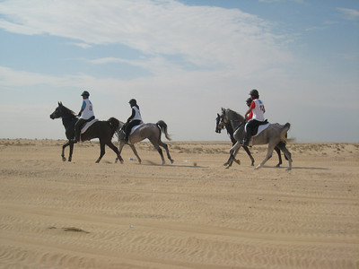 Dubai Endurance Stables team