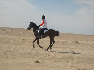 One of the Dubai Endurance Stable team.
