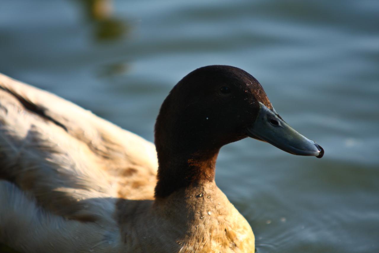 ducks-17
