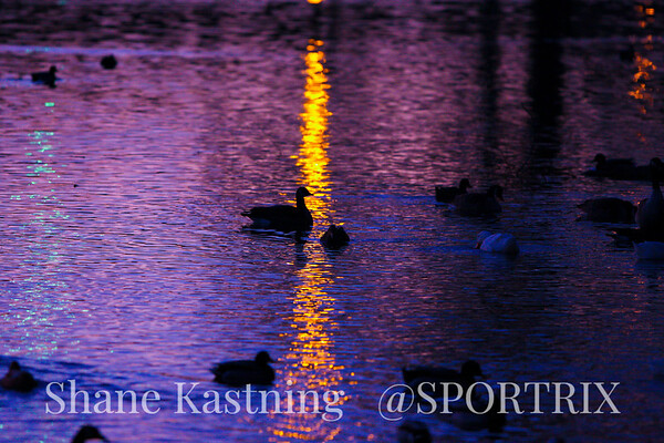 Ducks Last Day 2011