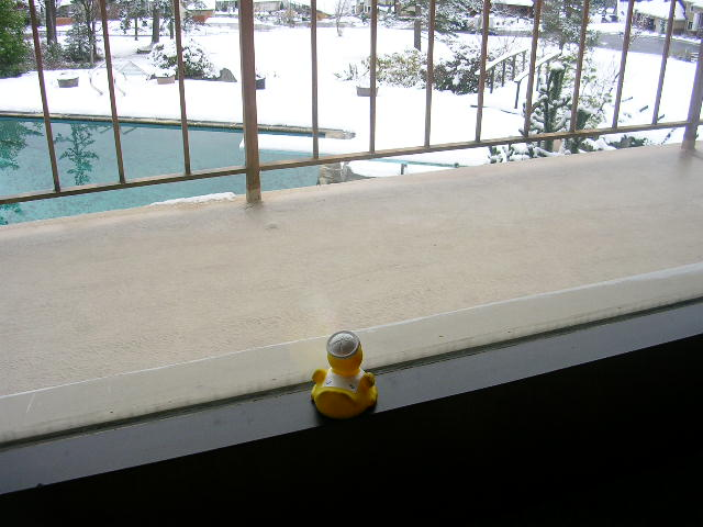 Duck looks out at the snow.  He REALLY wants to go outside.