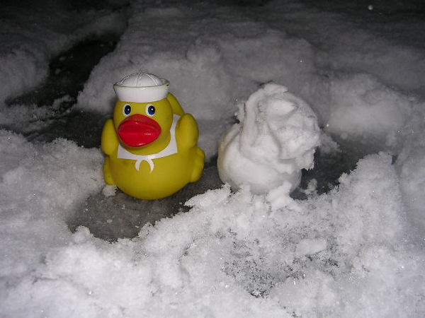 Duck and his snow duck