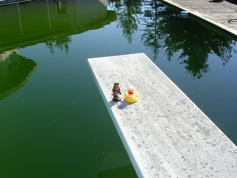 Pirate and Duck explored the area.  Here they are sitting on the diving board overlooking the pool.  Pirate is excited because it can double as a plank if anyone gets too rambunxious.