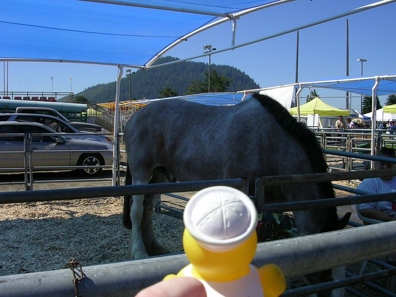 Duck met a Clydsdale at the Seattle Highland games