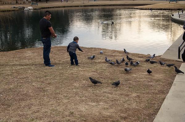 Ducks at Avondale Park, Birmingham, AL 2/9/2014