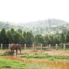 "Seila enjoys the enclosure built for her by EARS - Nov 2014<br /> <br /> All print proceeds go to EARS to directly help Kiri, Seila and all the elephants around Asia.<br /> <a href=""http://www.earsasia.org"">http://www.earsasia.org</a>"