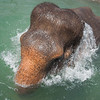 """Water flows off Sombo's back as she rises out of her pool -  July 2012<br /> <br /> All print proceeds go to EARS to directly help Sombo and her elephant friends around Asia.<br />  <a href=""""http://www.earsasia.org"""">http://www.earsasia.org</a>"""