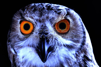 OWL006