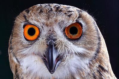 OWL003