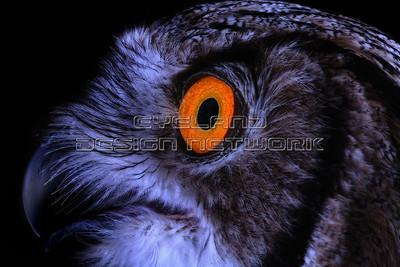OWL002