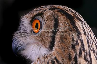OWL007
