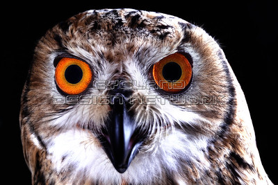 OWL005