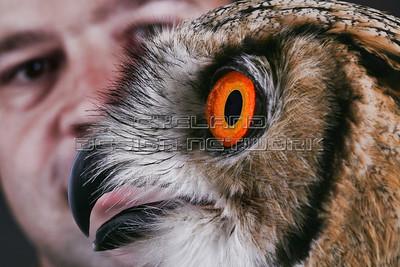 OWL012