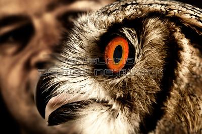 OWL014