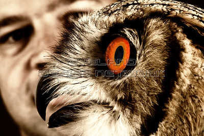 OWL013