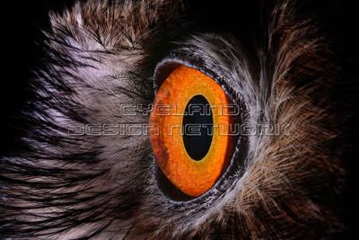 OWL016