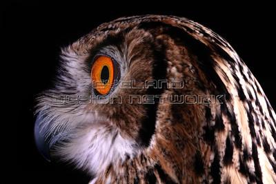 OWL009