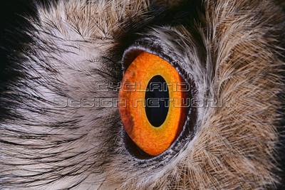 OWL018
