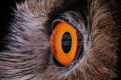 OWL017