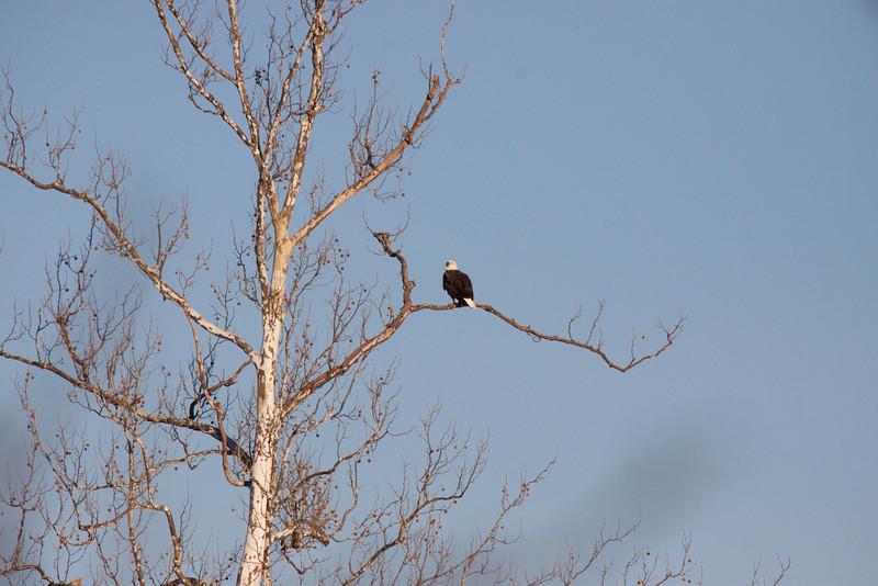 Long range eagle.