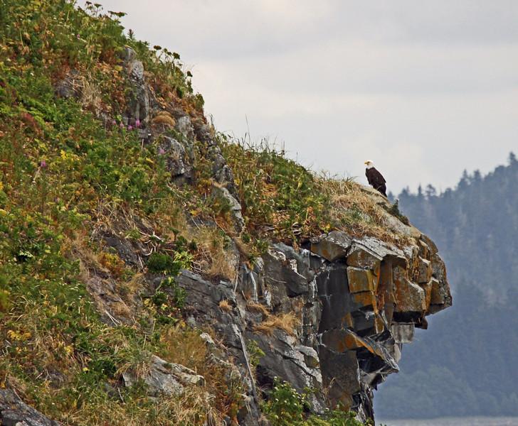 Eagle on outcrop in Alaska