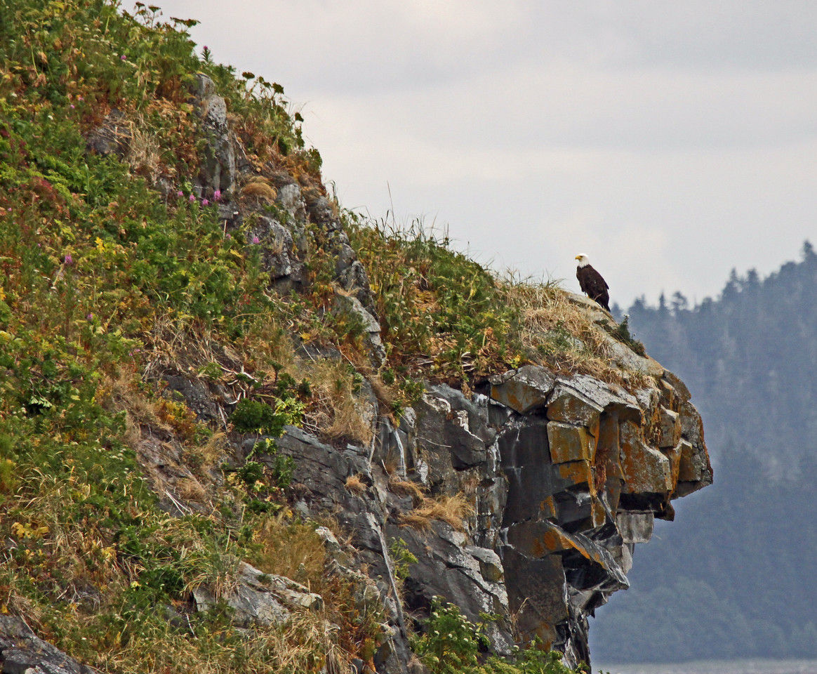 Eagle on outcrop in Alaska
