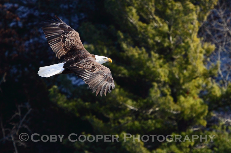 Great Eagle watching day...but a little cold...4 Degrees with the wind chill