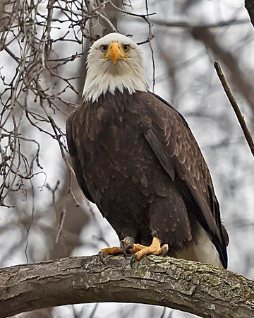 Eagles Of the James