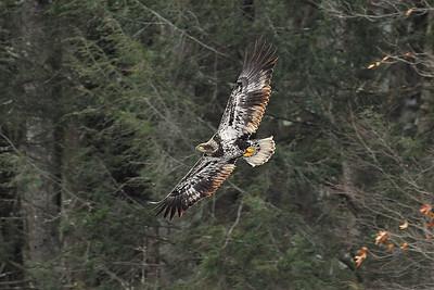 Eagles PA 2010