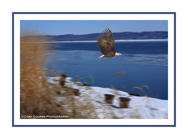 February 27, Not the greatest composit but I am just learning photoshop. This is the eagle from the shot of down town in last month's daily. I moved him to a more classic river shot but not sure if it works. Input on improvements is more than welcome.