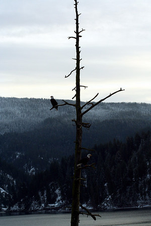 Do you see 2 Eagles?
