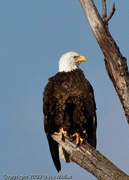Eagles_and_Trains_20100212_0158