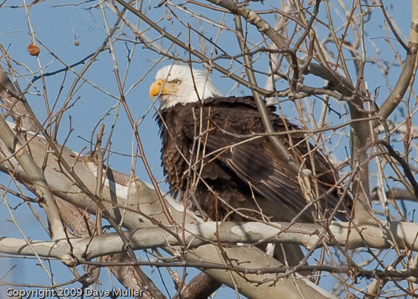 Eagles_and_Trains_20100212_0021