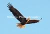 1_eagle_229793 c3