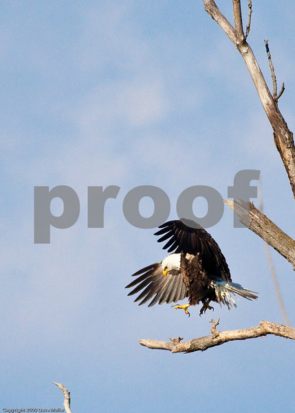 Eagles_and_Trains_20100212_0090