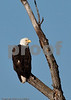 Eagles_and_Trains_20100212_0185