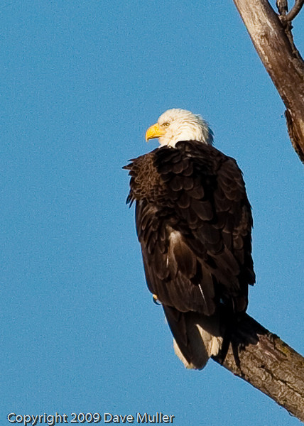 Eagles_and_Trains_20100212_0212