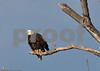 Eagles_and_Trains_20100212_0130