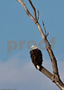 Eagles_and_Trains_20100212_0222
