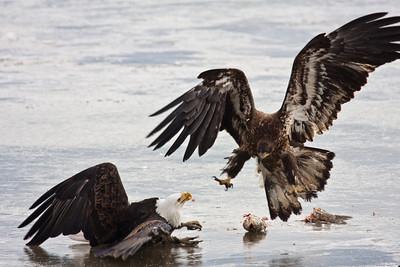 Eagles - 2011