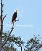 1_eagle_229940 c