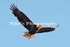 1_eagle_229793 c