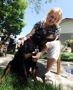 Diane Willson plays with Ebony at their Longmont home on Wednesday. Ebony the Rottweiler and current owners, Dave and Diane Willson, have taken a complicated journey to end up together. For more photos and a video of Ebony, go to www.dailycamera.com. Cliff Grassmick / June 15, 2011