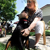"Diane Willson plays with Ebony at their Longmont home on Wednesday.<br /> Ebony the Rottweiler and current owners, Dave and Diane Willson, have taken a complicated journey to end up together.<br /> For more photos and a video of Ebony, go to  <a href=""http://www.dailycamera.com"">http://www.dailycamera.com</a>.<br /> Cliff Grassmick / June 15, 2011"