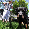 "Diane Willson looks over Ebony at their Longmont home on Wednesday.<br /> Ebony the Rottweiler and current owners, Dave and Diane Willson, have taken a complicated journey to end up together.<br /> For more photos and a video of Ebony, go to  <a href=""http://www.dailycamera.com"">http://www.dailycamera.com</a>.<br /> Cliff Grassmick / June 15, 2011"