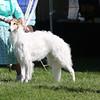 Echovesna's Hot Rod 5.25.08<br /> 2nd 9-12 dogs